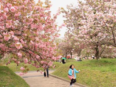 春爛漫!花巡りの旅 (1泊2日) 広島造幣局「花のまわりみち」編 2−1