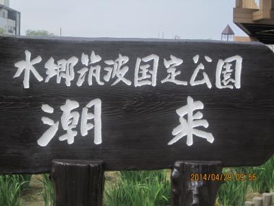 あやめには早いけど ① 鹿島神宮から 潮来あやめ園 佐原水生植物園