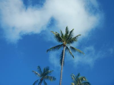 2014 Hawaii オアフ島 その2