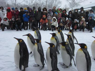 雪祭り・流氷・ペンギンさんのお散歩・・盛りだくさんの北海道の旅
