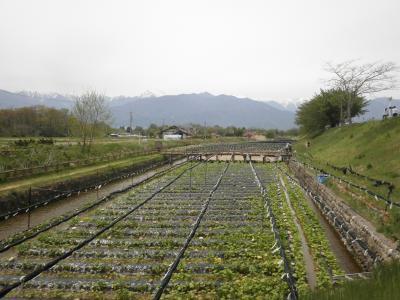 穂高駅より大王わさび農場まで歩いてみました。