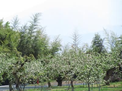 長野新幹線に乗って茶臼山動物園へ2014年のGW後半のレッサーパンダ詣(1)プロローグ&エピローグ編:りんごの花咲く信州から動物園いろいろ