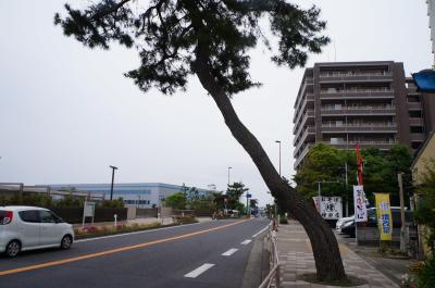 目指せ京都三条大橋!  東海道ウォーク  3回目  戸塚宿~大磯宿