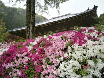 雨の中、関西花の寺・久安寺へ