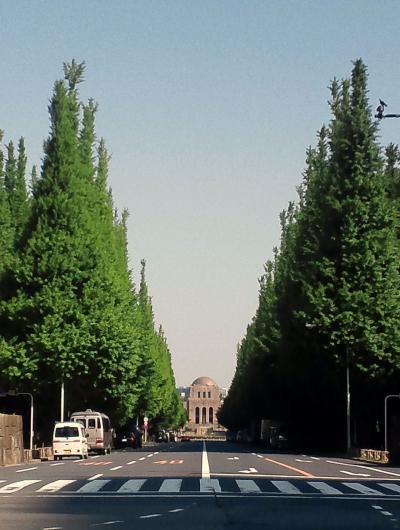 My fovarite place ′Icho-namiki′♪