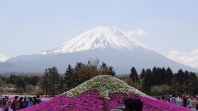 富士河口湖町 冨士芝桜の観光 上巻