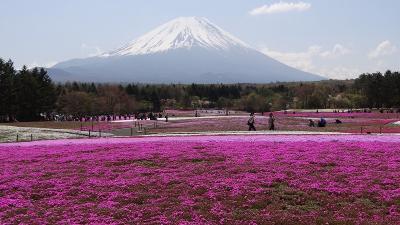富士河口湖町 冨士芝桜の観光 下巻