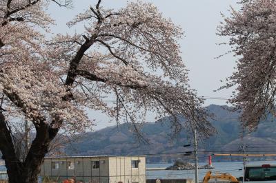 ひょっこりひょうたん島と満開の桜