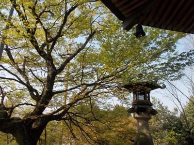 関善光寺と桜