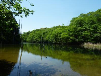 新緑に癒されて 海上の森ミステリーハイキング♪