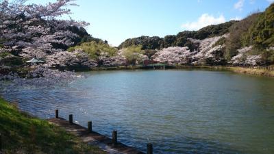 春を撮影~京都・愛知~