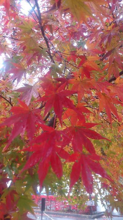 2013年 秋の日光