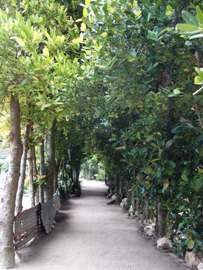 備瀬のフクギ並木をあるく。日本にこんなにすばらしいところがあるとは。