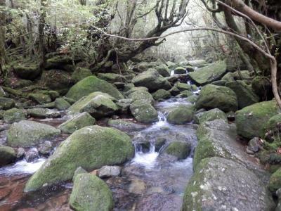 屋久島最終日 白谷雲水峡へプチハイキング~指宿遠征へ♪ (屋久島4日目)