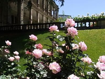 三菱開東閣:高輪の薔薇