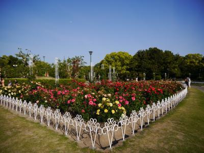 鶴舞公園を彩る春の花たち