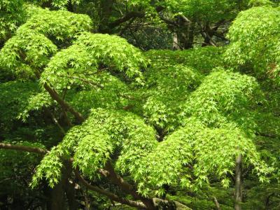 母と行く病院帰りの春日大社☆藤より綺麗な新緑にうっとり♪