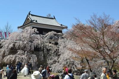 上田城址へ花見に行ってくるみのつけだれでそばをいただく