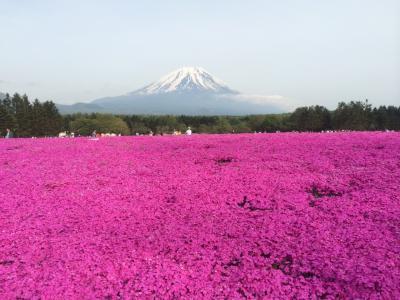 富士芝桜まつりに行ってきました。
