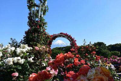 富士と薔薇 2014.05.18