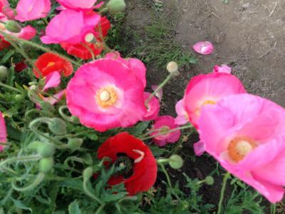 こうのす花まつり