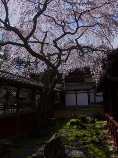 今年も京都の桜の時期に・・・2