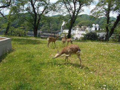 岩手のB級でマイナーな観光地めぐり1405  「薬師公園」  ~釜石・岩手~