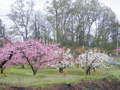 2014年 春のスケッチ~日野春