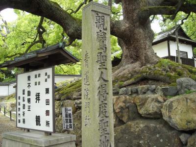 あきもせず 京都(2/3):青蓮院と白川畔の明智光秀の塚