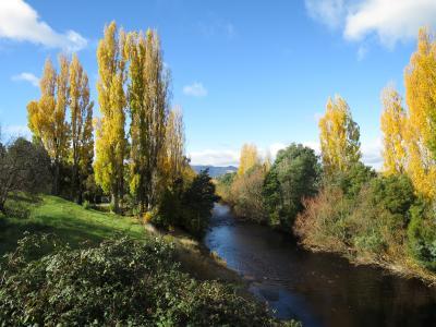 Wild & Fresh Tasmania 2014 秋 8日目後半、9日目 (ホバート~シドニー~成田)