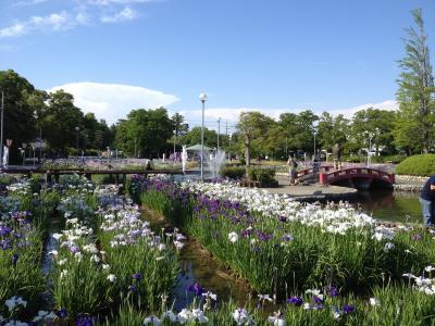 碧南市油淵花しょうぶ公園は、今『しょうぶの花』が満開で多くの人を待っています。