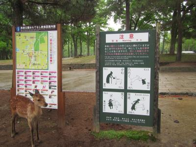 奈良:奈良公園周辺・西ノ京・斑鳩エリアを1泊2日