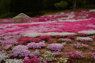 羊蹄山は見えなかったけれど、三島さんちの芝桜は待っていてくれました! 編~2014北海道の旅2