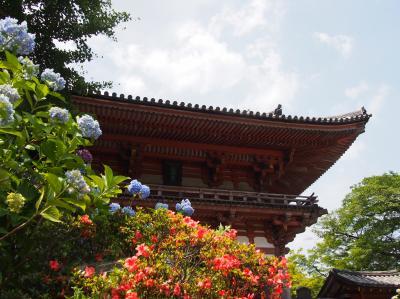 関西花の寺第十二番久安寺のアジサイ