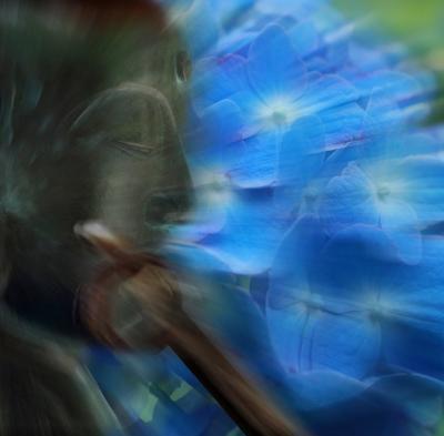 紫陽花寺がピアノ寺、朱アカの鳥居のトンネル抜けたら.........ROSE 2014 失策版