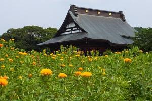 長福寿寺の紅花と野見金公園の紫陽花 2014