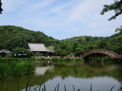 称名寺散策と八景島あじさい祭り