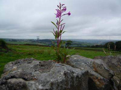 英国イングランド地方とちょっとだけウエールズの旅 嵐が丘の原風景ハワース