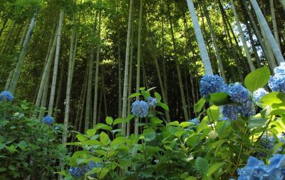 鎌倉明月院が空の青に染まるとき