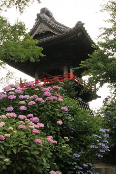 色とりどりのあじさいを見に!(3) 熊谷のあじさい寺「能護寺」