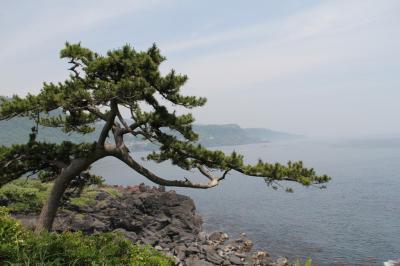 伊豆高原と城ヶ崎海岸