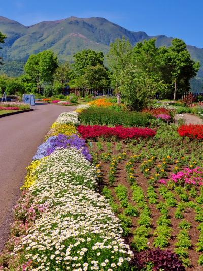 くじゅう花公園a  久住山を借景とした花畑広々と ☆温室のベコニアも多彩に
