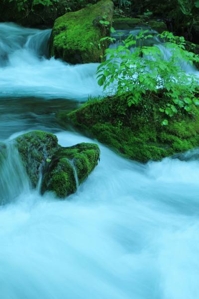 行くぞ東北♪ 梅雨でも楽しめる青森 ②新緑の奥入瀬で深呼吸