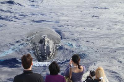 鯨が呼ぶ島マウイ
