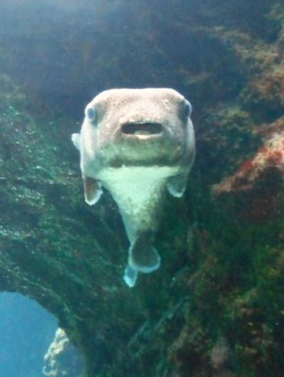 美ら海水族館 格安利用