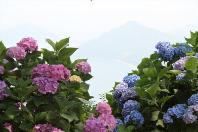紫雲出山アジサイと箱浦ビジターセンター「常世亀」