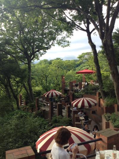 鎌倉の山々巡り 紫陽花が良い&樹ガーデン