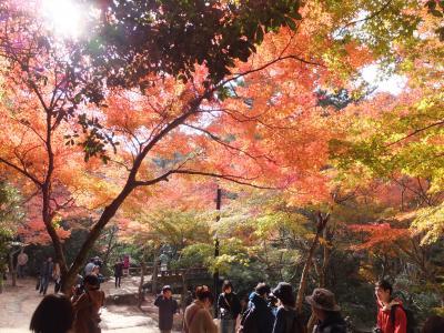 紅葉シーズンの宮島(本年2度目)