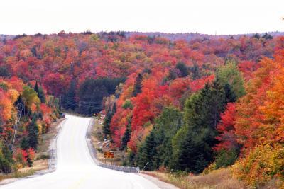 アルゴンキン州立公園 紅葉満喫