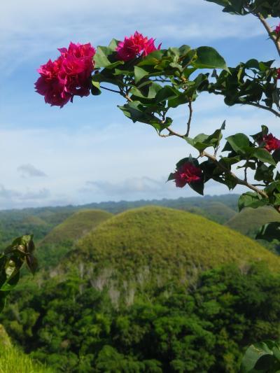 フィリピン 「行った所・見た所」 ボホール島のチョコレートヒルを眺める